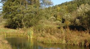 Tümpel im Naturschutzgebiet